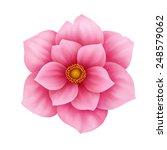 vector anemone pink flower... | Shutterstock .eps vector #248579062