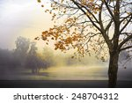 Autumn Landscape With Fog And...