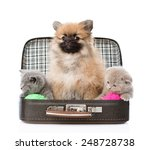 Stock photo spitz puppy and two scottish sitting in a bag isolated on white background 248728738