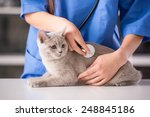 Stock photo veterinarian doctor is making a check up of a cute beautiful cat 248845186