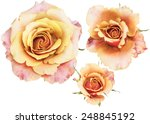 Stock photo three step of rose 248845192
