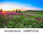 The Summer  Landscape With ...