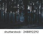 mysterious dark night forest