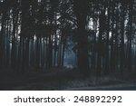mysterious dark night forest | Shutterstock . vector #248892292