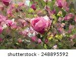 abstract triangular pink... | Shutterstock .eps vector #248895592