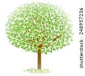 leaf tree fresh green | Shutterstock .eps vector #248957236