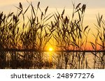 reed early in the morning on... | Shutterstock . vector #248977276