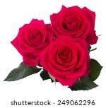 Three Dark Pink Roses Isolated...