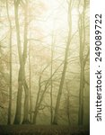 nature and environment. forest... | Shutterstock . vector #249089722