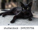 Stock photo a black cat on street 249255706