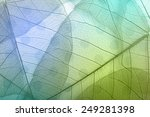 macro leaves background texture ... | Shutterstock . vector #249281398