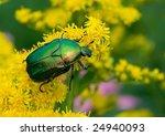 Bug On Yellow Colour Creeps On...
