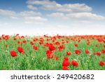 Red Poppy Flowers Meadow...