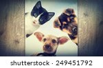 Stock photo puppy and kitten peering 249451792