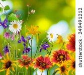 beautiful flowers in the garden ... | Shutterstock . vector #249491212