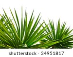 Palm Leaves Border Isolated On...