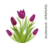 Five Purple Violet Tulips...