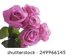 Pink Roses Isolated On A White...