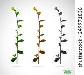 vector image of leaves on white ...   Shutterstock .eps vector #249971836