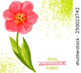 vector illustration of tulips....   Shutterstock .eps vector #250023742