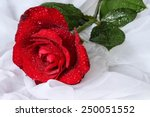 Red Rose With Water Drops  ...