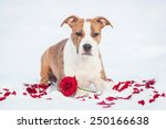 Adorable Puppy With Rose And...