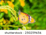 Beautiful Butterfly On Flower...