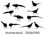 Pheasant Vector Silhouettes ...