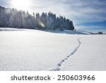 Footprints On Snow  Tyrol ...