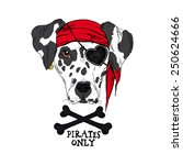 illustration of doggy pirate   Shutterstock .eps vector #250624666
