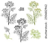 Set Of Dill  Isolated On White...