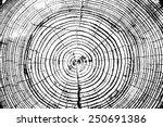 Tree Rings Saw Cut Tree Trunk...