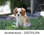 Stock photo puppy dog 250701196