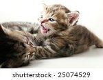 Stock photo kittens play 25074529