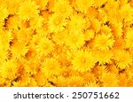 dandelion background | Shutterstock . vector #250751662