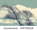 Silhouette Of Two Trees On...