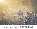 retro texas blue bonnet flower... | Shutterstock . vector #250973662