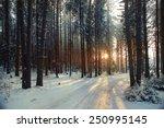 Landscape Snow Trees Dense...