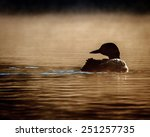 Watchful Loon In Silhouette...