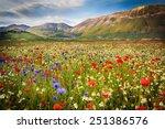 flower landscape in...   Shutterstock . vector #251386576