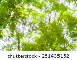 green bokeh from tree  green... | Shutterstock . vector #251435152