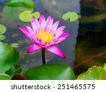 pink lotus flower beautiful...   Shutterstock . vector #251465575