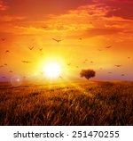 Warm Sunset On The Wild Meadow. ...