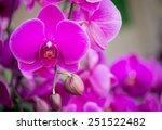 pink phalaenopsis orchid flower | Shutterstock . vector #251522482