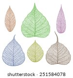 vector leaves isolated and... | Shutterstock .eps vector #251584078
