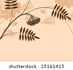 branch of a plant  mountain ash ... | Shutterstock . vector #25161415