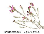 from nursery gardener | Shutterstock . vector #251715916
