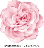 Pink flower free vector art 11604 free downloads vector beautiful light pink red rose flower isolated on white background vector illustration mightylinksfo