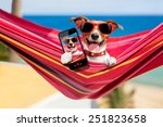 Stock photo dog relaxing on a fancy red hammock taking a selfie and sharing the fun with friends 251823658