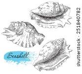 set of various sea shells | Shutterstock .eps vector #251840782
